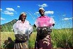 Zambian Women Hold Bags of Tilapia Fingerlings