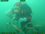 Mapping eel grass beds in Eagle Harbor