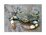 Blue crab on the beach. Louisiana