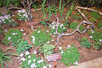 March 4, 2013 - Mid-Atlantic Region, Native Ground Cover