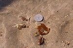 May 14, Small globs of weathered oil on Lafourche Beach, La.