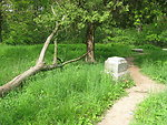 Bachelors Grove: fallen tree and nearby gravestones on path