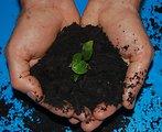 Composting Creates A Natural Fertilizer