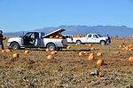 Pumpkin Gleaning 1