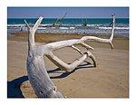 Driftwood on the beach, Louisiana