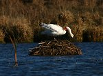 Restored Habitat Benefits Many Native Wildlife Species