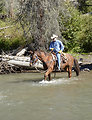 Prince Albert Riding