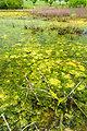 July 12, 2013 - A close look at a harmful algal bloom