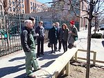 NYC Urban forest Chief