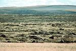 Yesterday's Prairie