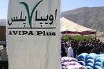 AVIPA Plus Wheat Seed Distribution 101005