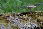 Mushroom with a centipede