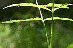 Sunshine on plant leaves