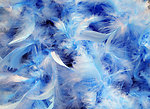 Blue feathers background