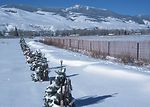 Three year old windbreak and snow fence catching s