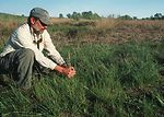 Yolo County farmer looks at native grass planting.