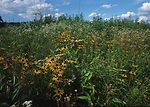 Early successional habitat restoration project in