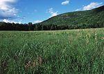 Warm season grassland habitat restoration project