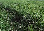 Vibrant growth of grasses in a warm season grassla