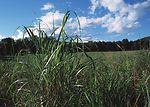 Warm season grassland habitat restoration in Litch