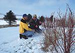 Redosier dogwood are among the shrub and tree plan