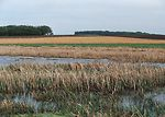 Cropland and wetlands provide wildlife habitat in