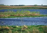 Wetlands recharge groundwater, store floodwaters,