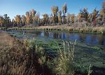 This restored wetland near Jackson, Wyoming will p