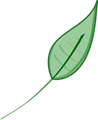Illustration of a green leaf