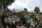 Servicemembers treat 8,100 patients, livestock in Mali