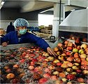 Afghan Pomegranates Reach Europe