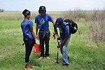 Members of Groundwork Denver Planting Cottonwood Trees