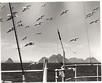 Seagulls flying in formation.