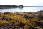 Kelp-covered granite at low tide.
