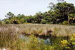 Looking over a tidal wetland area to oak and palmetto forest.