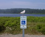 A sea-gull gives new meaning to reserved parking at Roque Bluffs State Park.