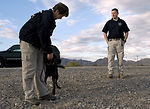 Nellis AFB officials host joint training exercise for local canine units