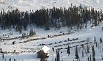 Iditarod 2006