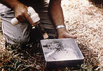 This field researcher is shown removing mosquitoes