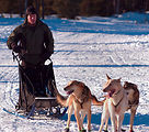 Elmendorf doctor to lead pack in Iditarod
