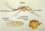 An illustration depicting morphologic characterist