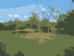 Missouri Trees