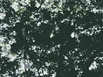 Vision Forum Trees