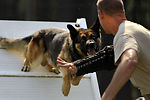 20th Security Forces Squadron Military Working Dog