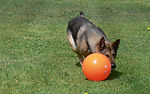 MWD recovers from PTSD