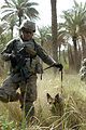 Military working dogs supplement sweep operation