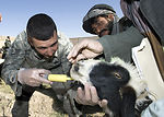 Veterinary care helps build relations with nomadic tribe