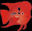 Flowerhorn Fish 2