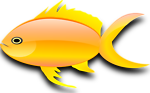 Pez dorado (gold fish)