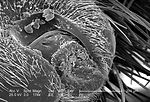 Moderately magnified 174X under a scanning electro